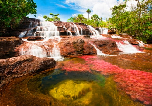 Caño cristales Colombia | Colombian Tourist